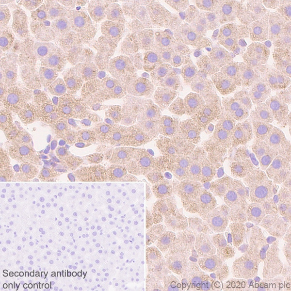 Immunohistochemistry (Formalin/PFA-fixed paraffin-embedded sections) - Anti-Sigma1-receptor antibody [EPR23266-69] - BSA and Azide free (ab273058)