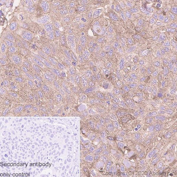 Immunohistochemistry (Formalin/PFA-fixed paraffin-embedded sections) - Anti-MVP antibody [EPR23594-106] - BSA and Azide free (ab273097)