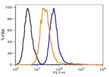 Uptake of 1,5 AG in Jurkat cells