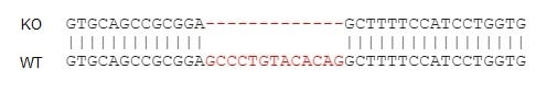 Sanger Sequencing - Human CD74 knockout Raji cell line (ab273378)
