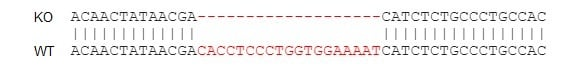 Sanger Sequencing - Human CXCR5 knockout Raji cell line (ab273380)