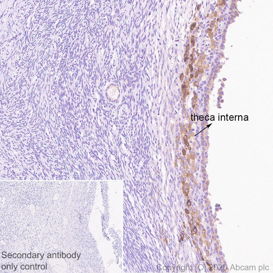Immunohistochemistry (Formalin/PFA-fixed paraffin-embedded sections) - Anti-Inhibin alpha antibody [PO12/8] - BSA and Azide free (ab273486)