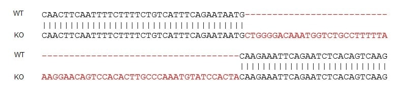 Sanger Sequencing - Human ACE2 knockout Caco 2 cell line (ab273731)