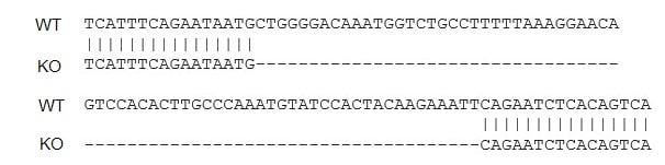 Sanger Sequencing - Human ACE2 knockout HepG2 cell line (ab273733)