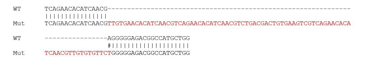 Sanger Sequencing - Human BSG (CD147) knockout A549 cell line (ab273748)