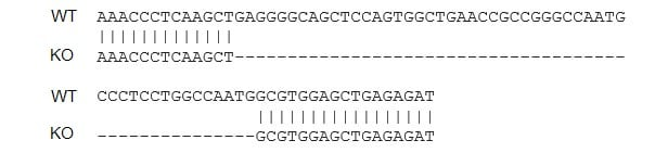 Sanger Sequencing - Human TNF knockout THP-1 cell line (ab273761)