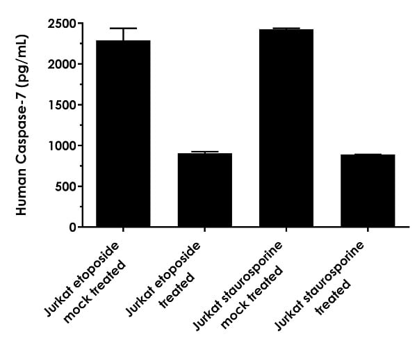 Interpolated concentrations of native  Caspase-7 in human Jurkat cell treated with or without etoposide (25 µM, overnight) and staurosporine (1 µM, 4 hours) based on 50 µg/mL extract loads.