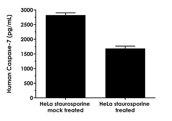 Interpolated concentrations of native Caspase-7 in human Hela cell treated with or without staurosporine (1 µM, 4 hours) based on 200 µg/mL extract loads.