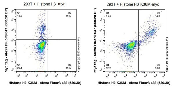 Flow Cytometry - Anti-Histone H3 (mutated K36M) antibody [EPR23614-91]