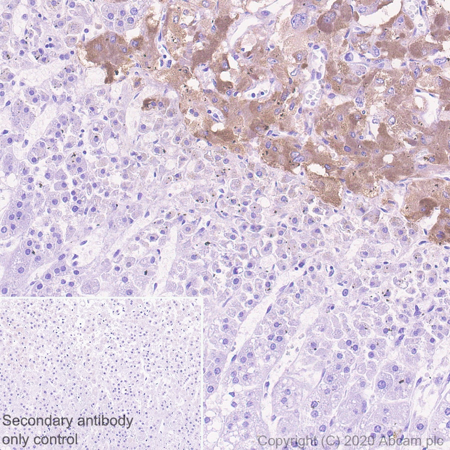 Immunohistochemistry (Formalin/PFA-fixed paraffin-embedded sections) - Anti-PCSK2 antibody [EPR23578-19] (ab274418)