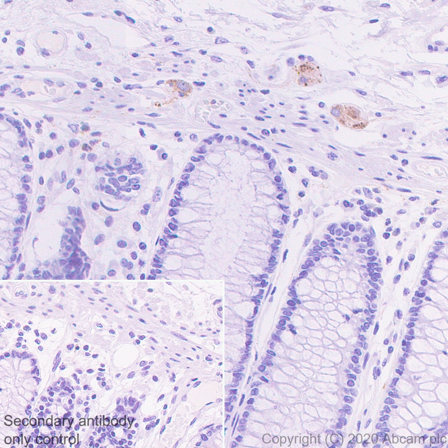 Immunohistochemistry (Formalin/PFA-fixed paraffin-embedded sections) - Anti-PCSK2 antibody [EPR23578-19] - BSA and Azide free (ab274427)