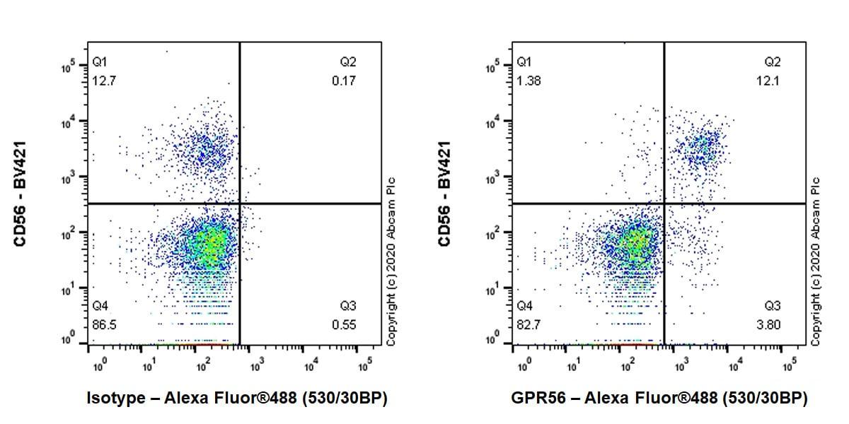 Flow Cytometry - Anti-GPR56 antibody [EPR23908-109] - BSA and Azide free (ab274428)