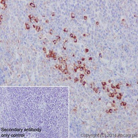 Immunohistochemistry (Formalin/PFA-fixed paraffin-embedded sections) - Anti-CD9 antibody [EPR2949]