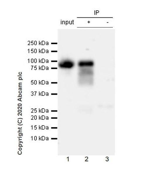Immunoprecipitation - Anti-B7-H6 antibody [EPR23470-210] - BSA and Azide free (ab275029)
