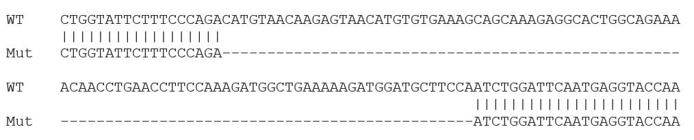 Sanger Sequencing - Human IL6 knockout A549 cell lysate