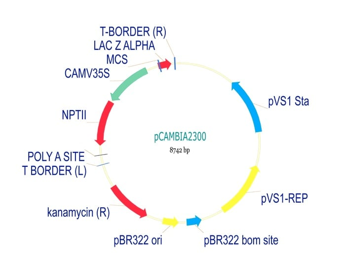 pCambia2300 Plant Expression Vector (ab275758)