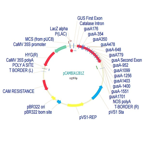 pCambia1281Z Plant Expression Vector (ab275779)