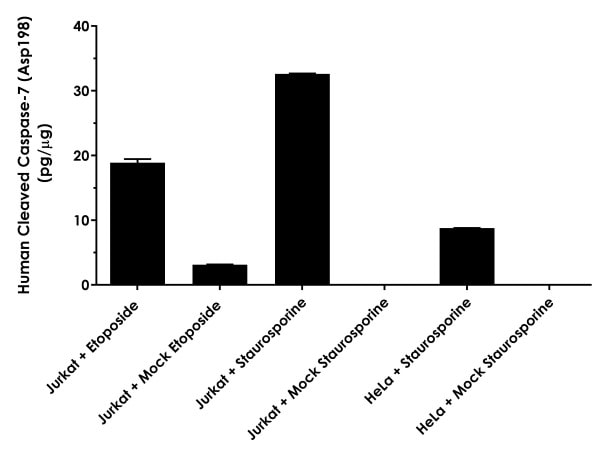 Comparison of Jurkat cell extracts treated with 50 µM etoposide for 4 hours vs mock treated, Jurkat and HeLa cell extracts treated with 1 µM staurosporine for 4 hours vs mock treated.
