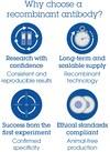 Alexa Fluor® 594 Anti-CD7 antibody [EPR4242] (ab277233)