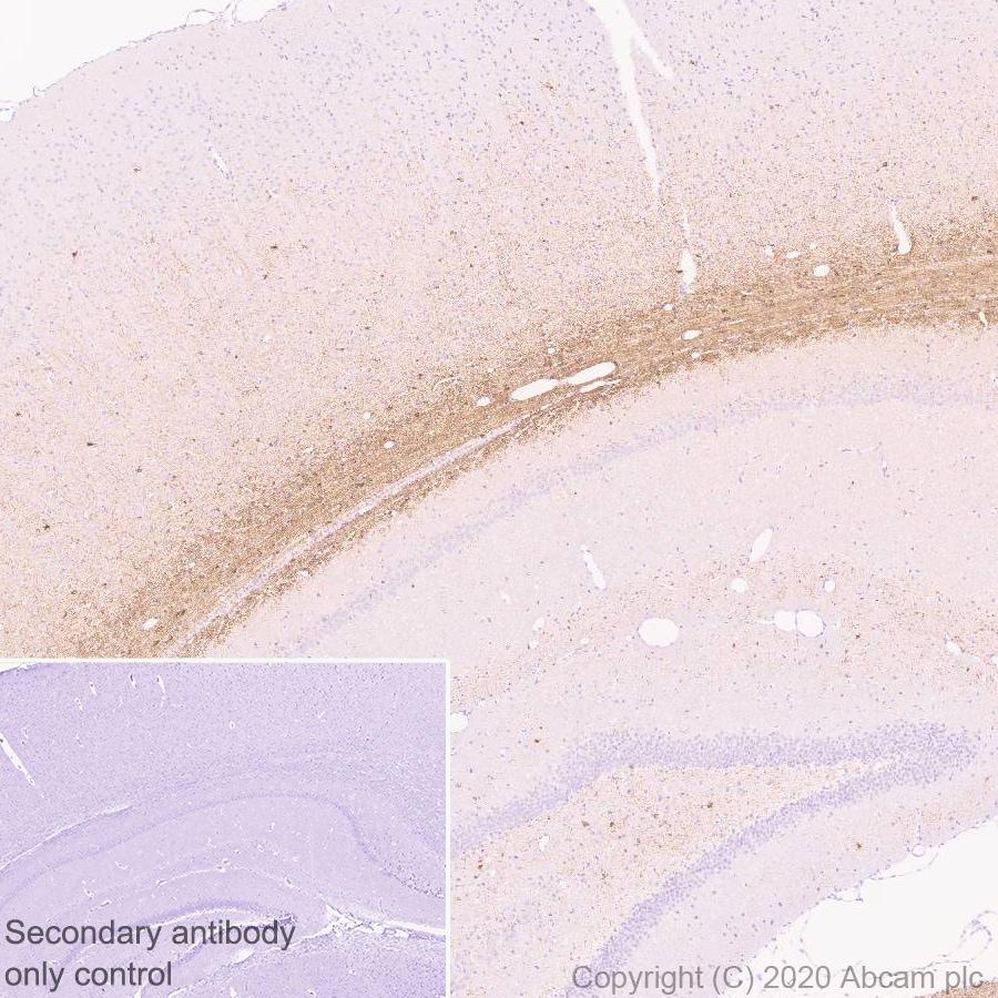 Immunohistochemistry (Formalin/PFA-fixed paraffin-embedded sections) - Anti-MAG/GMA antibody [EPR24276-125] (ab277524)
