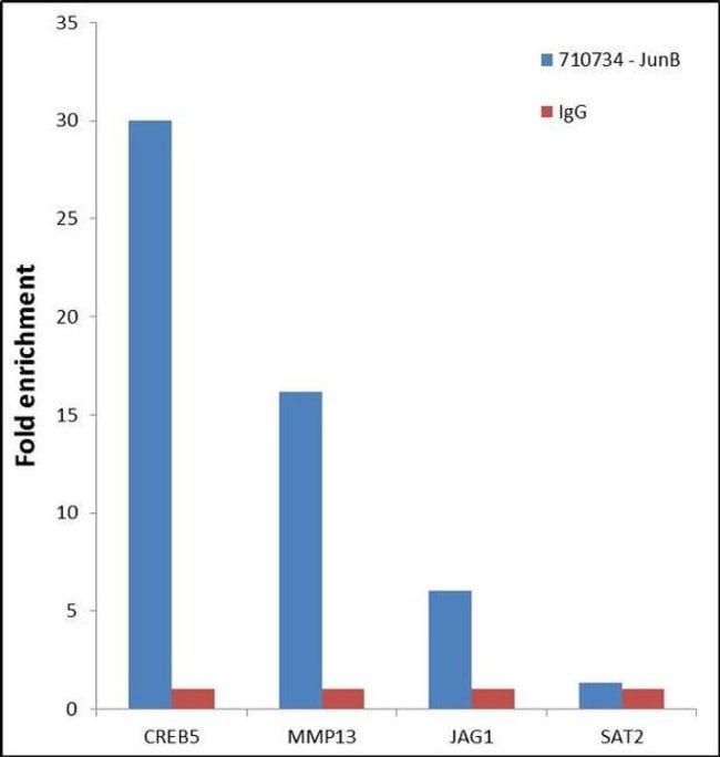 ChIP - Anti-JunB antibody [15HCLC] (ab277769)