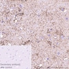 Immunohistochemistry (Formalin/PFA-fixed paraffin-embedded sections) - Anti-GFAP antibody [RP1003] (ab278054)