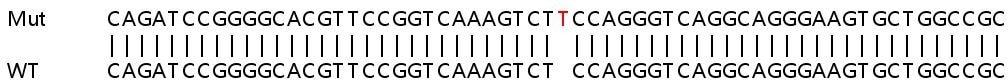 Sanger Sequencing - Human VDR (Vitamin D Receptor) knockout HeLa cell pellet (ab278813)