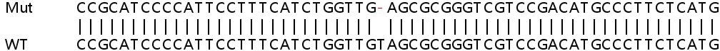 Sanger Sequencing - Human SMARCA4 (BRG1) knockout HEK293T cell pellet (ab278821)