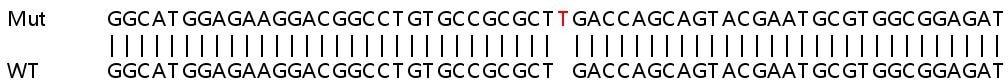 Sanger Sequencing - Human CDK6 knockout HeLa cell pellet (ab278879)