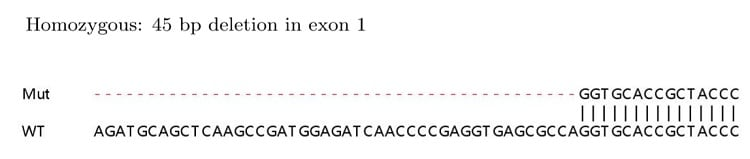 Sanger Sequencing - Human UCHL1 (PGP9.5) knockout HEK293T cell pellet (ab278928)
