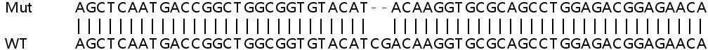 Sanger Sequencing - Human LMNB1 (Lamin B1) knockout HeLa cell pellet (ab278992)