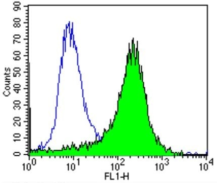 Flow Cytometry - Biotin Anti-PMP70 antibody (ab28499)