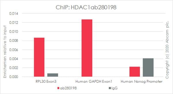 ChIP - Anti-HDAC1 antibody [EPR23847-170] - BSA and Azide free (ab280205)