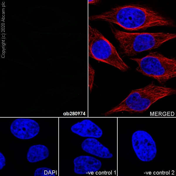 Immunocytochemistry - Mouse IgG1 monoclonal [R312-MouseIgG1]-Isotype control -BSA and Azide free (ab281291)