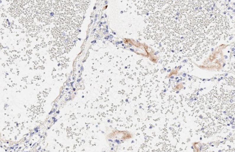 Immunohistochemistry (Formalin/PFA-fixed paraffin-embedded sections) -  (ab281311)