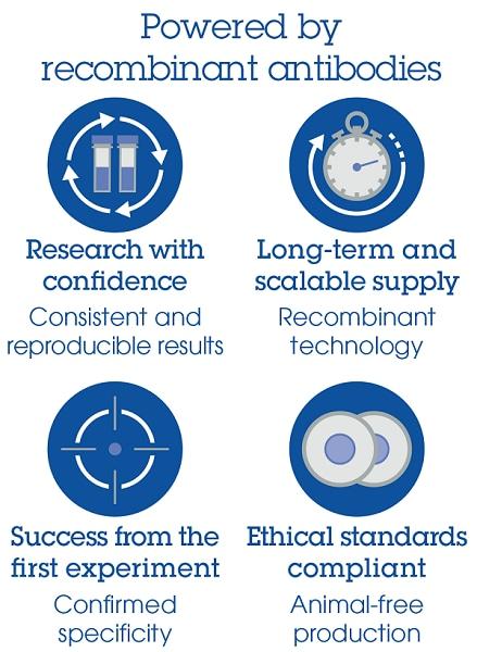 Recombinant Antibody Benefits