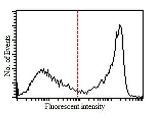 Flow Cytometry - Anti-CD90 / Thy1 antibody [IBL-6/23] (ab3105)