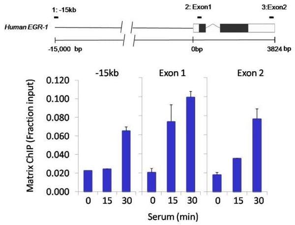 ChIP - Anti-mSin3A antibody - ChIP Grade (ab3479)