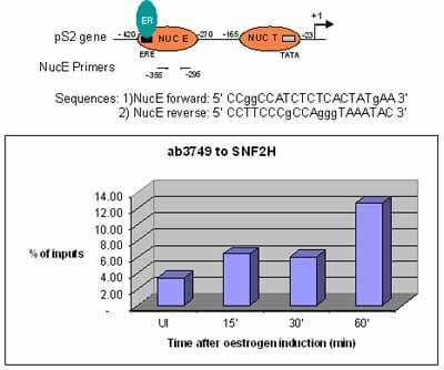 ChIP - Anti-SNF2H antibody - ChIP Grade (ab3749)