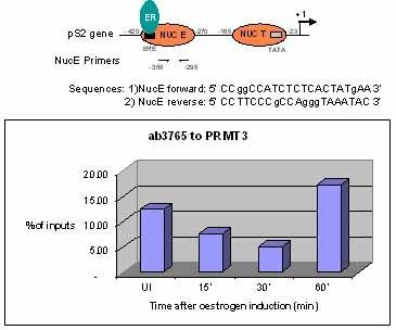 ChIP - Anti-PRMT3 antibody - ChIP Grade (ab3765)