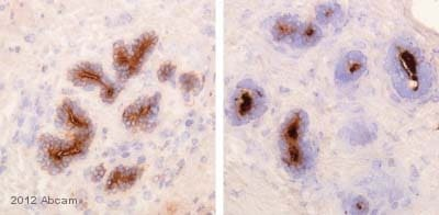 Immunohistochemistry (Frozen sections) - Anti-IgA Secretory Component antibody [SC-05] (ab3924)