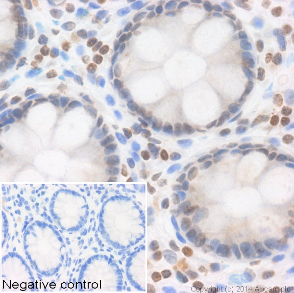 Immunohistochemistry (Formalin/PFA-fixed paraffin-embedded sections) - Anti-Histone H2A (hydroxy P26) antibody (ab30819)