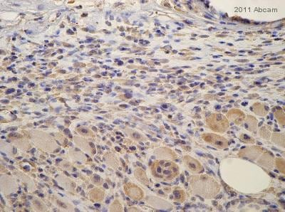 Immunohistochemistry (Formalin/PFA-fixed paraffin-embedded sections) - Anti-Nrf2 antibody (ab31163)