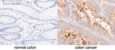 Immunohistochemistry (Formalin/PFA-fixed paraffin-embedded sections) - Anti-CD24 antibody [ALB 9] (ab31622)
