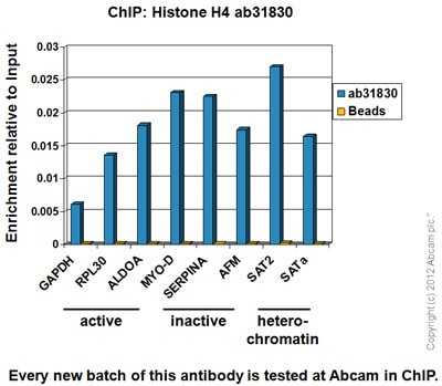 ChIP - Anti-Histone H4 antibody [mAbcam 31830] - ChIP Grade (ab31830)