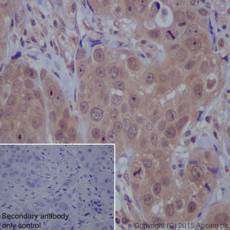Immunohistochemistry (Formalin/PFA-fixed paraffin-embedded sections) - Anti-mTOR antibody [Y391] (ab32028)