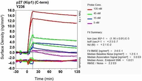 Other - Anti-p27 KIP 1 antibody [Y236] (ab32034)