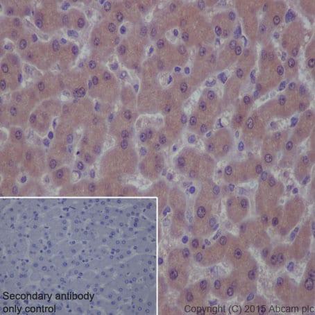 Immunohistochemistry (Formalin/PFA-fixed paraffin-embedded sections) - Anti-PKR antibody [YE350] (ab32052)