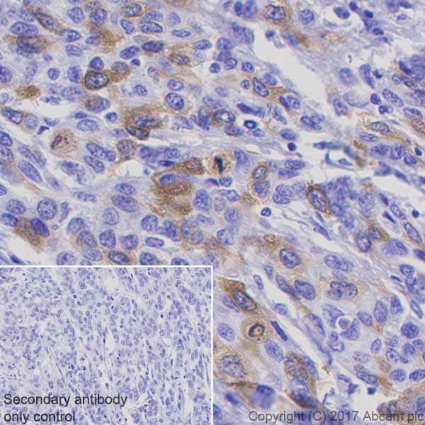 Immunohistochemistry (Formalin/PFA-fixed paraffin-embedded sections) - Anti-Cyclin B1 antibody [Y106] (ab32053)