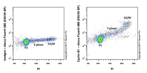 Flow Cytometry - Anti-Cyclin B1 antibody [Y106] (ab32053)